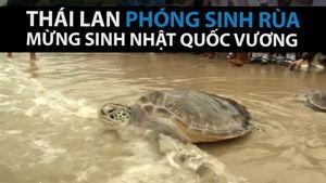 Thái Lan phóng sinh rùa mừng sinh nhật quốc vương