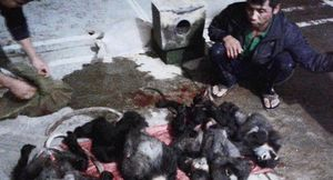 Săn voọc chân đen ở Campuchia, mang về nước tiêu thụ bị bắt giữ