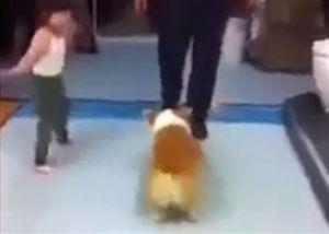 Chó cùng cô chủ nhí lắc mông theo điệu nhạc
