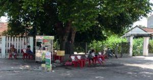 Cận cảnh cây thị 600 tuổi được trả hơn 1 tỷ đồng ở Quảng Ngãi