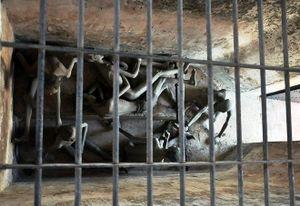Cựu tử tù 14 năm tại Côn Đảo: Cuộc vượt ngục đi tìm vũ khí giải thoát đồng đội