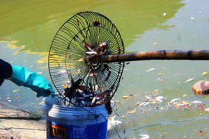 Cá chết trắng sông ở Đà Nẵng do nguồn nước ô nhiễm