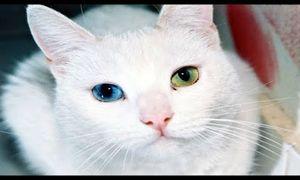 Tại sao bạn không nên nhìn thẳng vào mắt mèo?