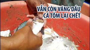 Vẫn còn váng dầu trên sông Chà Và, cá tôm lại chết