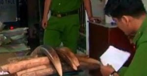 Clip: Phát hiện hơn 1,4 tấn ngà voi nhập lậu
