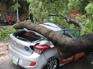 Nữ hành khách bị thương khi cây cổ thụ đè bẹp taxi