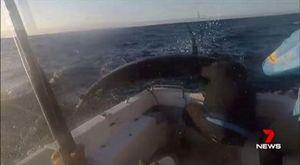 Cá kiểm khổng lồ vọt lên thuyền tấn công ngư dân