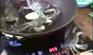 Bị đun trong chảo nóng, cua bò ra ngoài tắt bếp cứu đồng loại