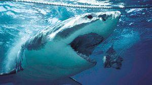 10 bộ phim đáng sợ nhất về 'hung thần cáp quang': Cá mập