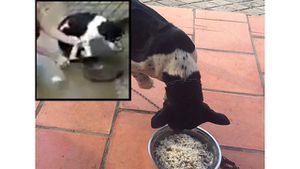Chú chó bị chặt chân sợ sệt nhưng vẫn quẫy đuôi mừng khi được chủ chăm sóc