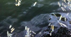 Bao cao su lại nổi trắng mặt hồ ở Hà Nội