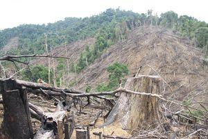 Khẩn trương khởi tố vụ phá rừng Tiên Lãnh (Quảng Nam)