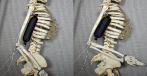 Cơ bắp tổng hợp giúp AI mạnh mẽ và khéo léo như trong phim giả tưởng