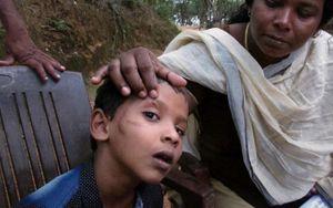 Bệnh dại ở Ấn Độ: Cuộc chiến khốc liệt không hồi kết