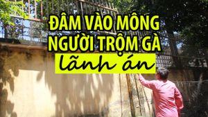Lão nông Tây Ninh đâm vào mông người trộm gà lãnh án