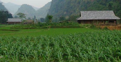 Cong dong kinh te ASEAN: Thach thuc cho nong lam nghiep - Anh 10