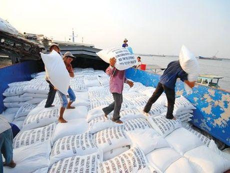 Philippines se mua 450.000 tan gao Viet Nam - Anh 1