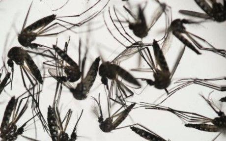 Nguoi lon dang khoe manh co the roi loan than kinh neu nhiem virut Zika - Anh 1