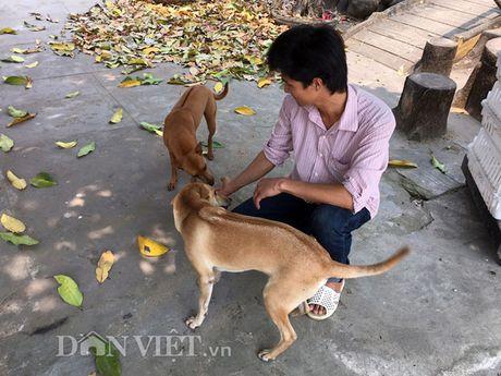 Chi tram trieu mang cho quy Phu Quoc ve nuoi chung voi... ga - Anh 9