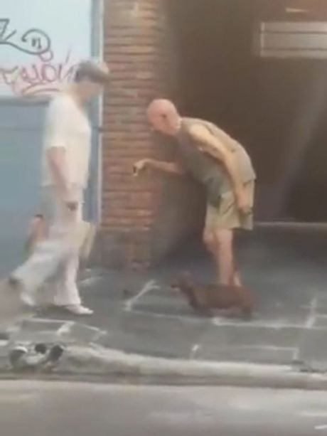 Tinh cam giua chu cho va cu ong khien nhieu nguoi nguong mo [VIDEO] - Anh 2