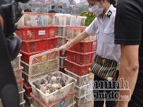 Ha Noi: Phat hien 4.000 con chim bo cau nghi nhap lau tu Trung Quoc - Anh 2