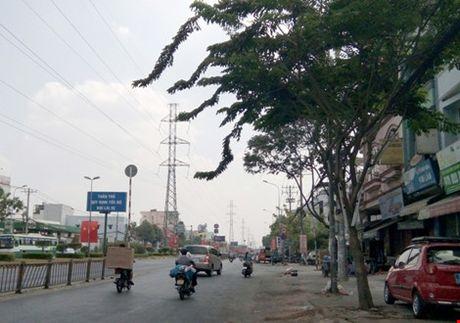Khong cho don 162 cay xanh o duong Kinh Duong Vuong - Anh 1