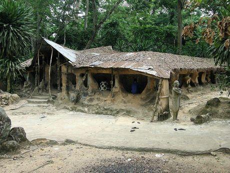 Lac vao khu rung thieng noi tieng nhat chau Phi - Anh 3