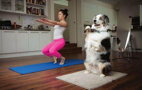 Khi dong vat tap yoga - Anh 9