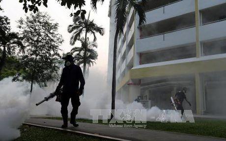 Them nhieu truong hop nhiem virus Zika tai Singapore - Anh 1