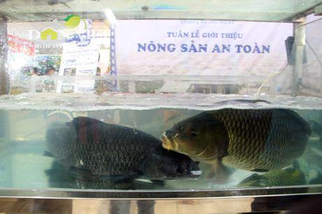 Nong san dac san an toan Bac Bo quy tu chon Thu do - Anh 4