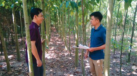 Huong mo cho do thi xanh - Anh 1