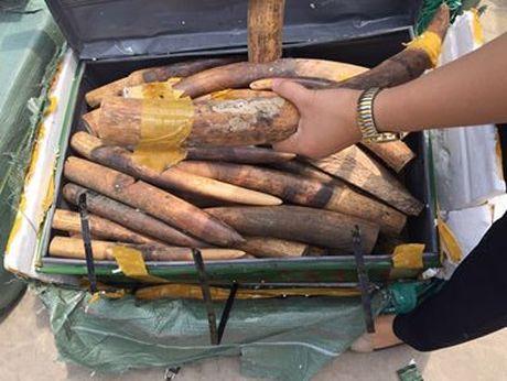 Ha Noi: Bat giu 390kg nga dong vat tai san bay Noi Bai - Anh 1