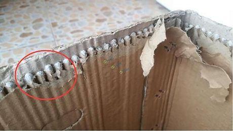 Chieu tro moi: Do be tong ben trong thung carton hoa qua de an gian trong luong - Anh 2