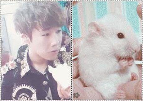 10 idol Kpop de thuong giong het chuot hamster - Anh 2