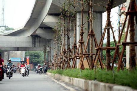 Trong cay duoi duong sat tren cao: Dung pha Ha Noi bang dinh kien - Anh 1