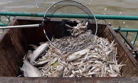 Nguoi phat ngon Chinh phu: Dang dieu tra, lam ro cac nguon xa thai vao ho Tay - Anh 1