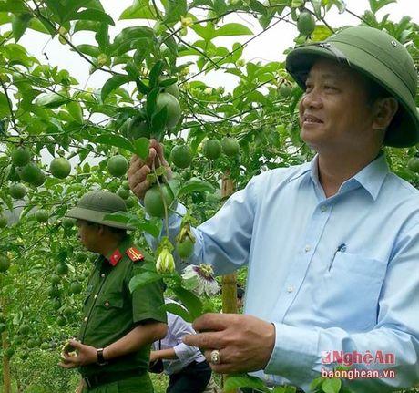 Chanh leo dat 25 tan/ha o Tuong Duong - Anh 2