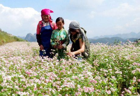 Ha Giang san sang don khach den voi Le hoi Hoa Tam giac mach - Anh 1