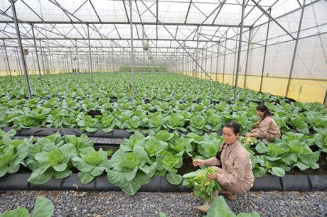 Bai cuoi: Loi di nao cho san xuat nong nghiep hang hoa? - Anh 1