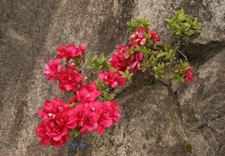 Len Hoang Lien Son thuong ngoan hoa do quyen muon mau - Anh 11
