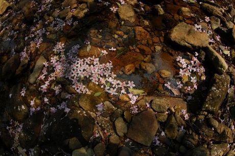 Len Hoang Lien Son thuong ngoan hoa do quyen muon mau - Anh 13
