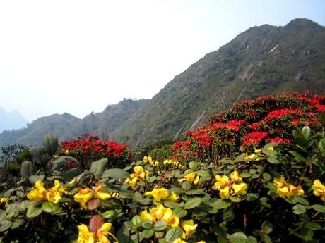 Len Hoang Lien Son thuong ngoan hoa do quyen muon mau - Anh 3