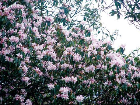 Len Hoang Lien Son thuong ngoan hoa do quyen muon mau - Anh 4