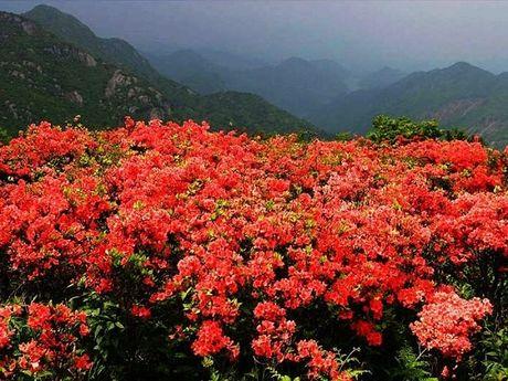 Len Hoang Lien Son thuong ngoan hoa do quyen muon mau - Anh 6