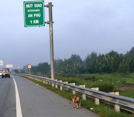 Chum anh: Hang rao duong cao toc TP.HCM-Long Thanh-Dau Giay bi lan chiem - Anh 11