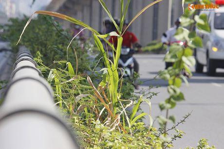Chau hoa vo nhech nhac trong ham chui tien ti o Ha Noi - Anh 12