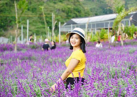 Hoa oai huong no tim tren cao nguyen Lao Cai - Anh 4