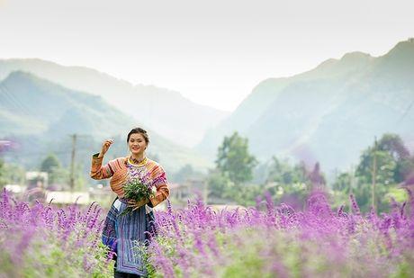 Hoa oai huong no tim tren cao nguyen Lao Cai - Anh 6