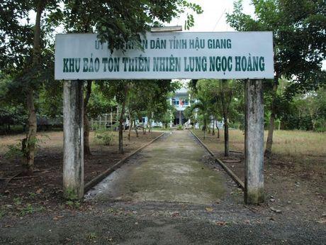 Be tac di doi dan o khu bao ton Lung Ngoc Hoang (Hau Giang) - Anh 1