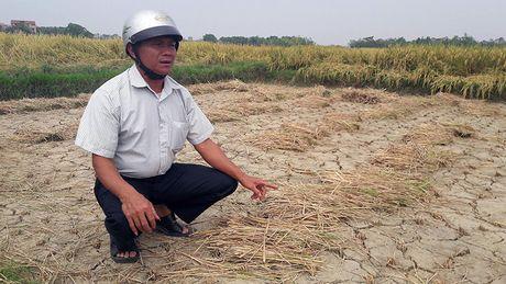 Bac Giang: Han han nghiem trong vi lap muong lam du an lang nghe - Anh 1